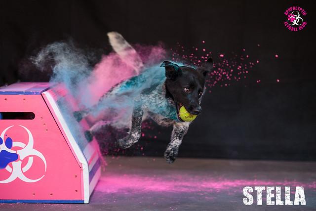 Holi Flyball Stella