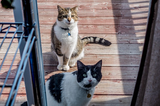 The Neighbour Cats | by Stephen Downes