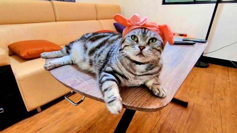 日本奇譚KITAN俱樂部扭蛋貓咪頭巾三麗鷗Sanrio篇