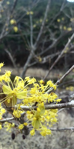 봄꽃 산책길 | 문장대야영장 산책로