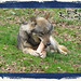 And_Out_Come_The_Wolfes-09-12-39 AM-