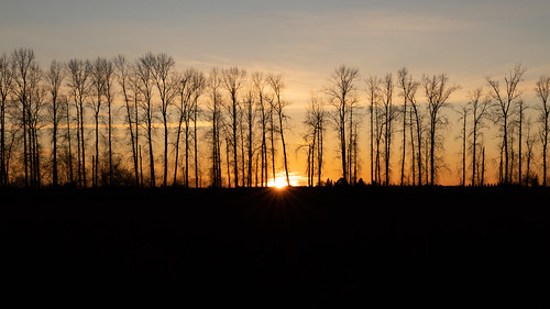 birch trees silhouette sunset mapleridge sky winter season landscape sunrays sonya73 black