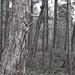 QUADRA forest in winter