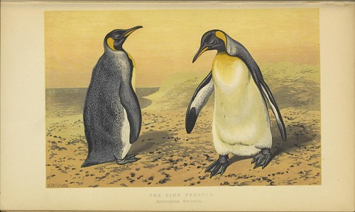 n52_w1150 | by BioDivLibrary