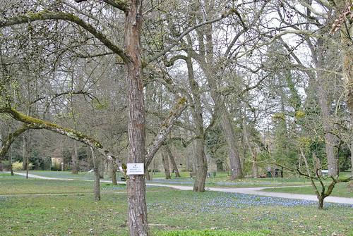:: Botanic Garden   by .Ines