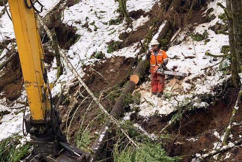 or58 treeremoval trees hazardtrees oregondot oregon damage wood safety chainsaw