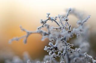 Winterwärme | by Christina Wieck / Zweitliebefotografie