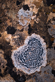 Lichen Art | by IntrepidXJ
