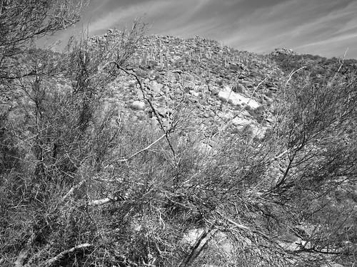 arizona az tortolita berg hill mountain kaktus cactus saguaro strauch shrub zweige twigs pattern crosshatching schraffur texture landschaft landscape monochrome minimal minimalism minimalismus minimalistisch abstrakt abstract