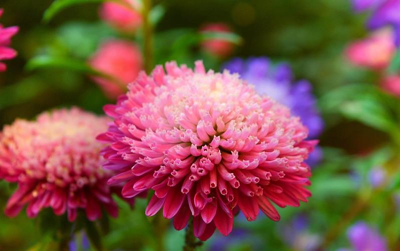 Обои Цветок, Розовый цветок, Pink flower картинки на рабочий стол, раздел цветы - скачать