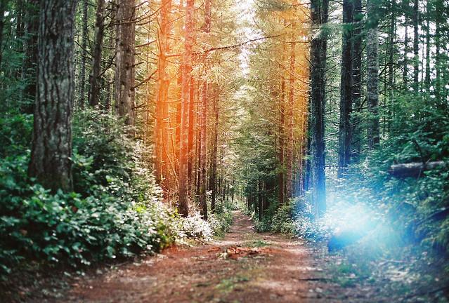Ueland trail