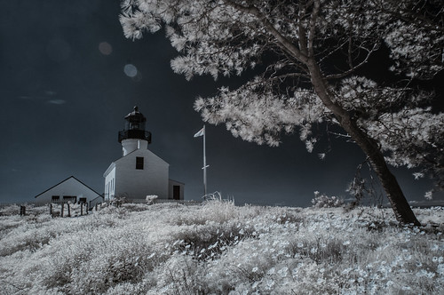 cabrillonationalmonument sandiego infrared infraredphotography ir convertedinfraredcamera surreal oldpointlomalighthouse sunflare wildflowers channelswapping composition