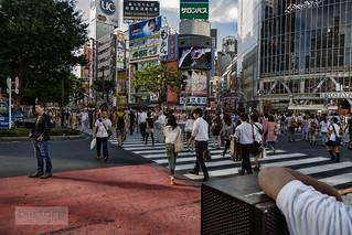 Peatones en Shibuya Tokyo 2012   by txirloro_javi