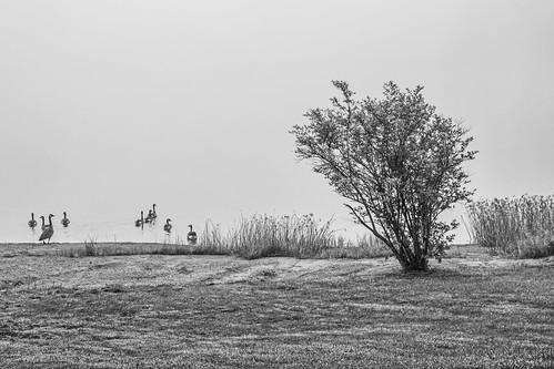 2016 août arbre brouillard brume canada eau lac manoirdessables nikond7100 noiretblanc orford paysagedegrisaille plandeau québec ©mylènegauthier été