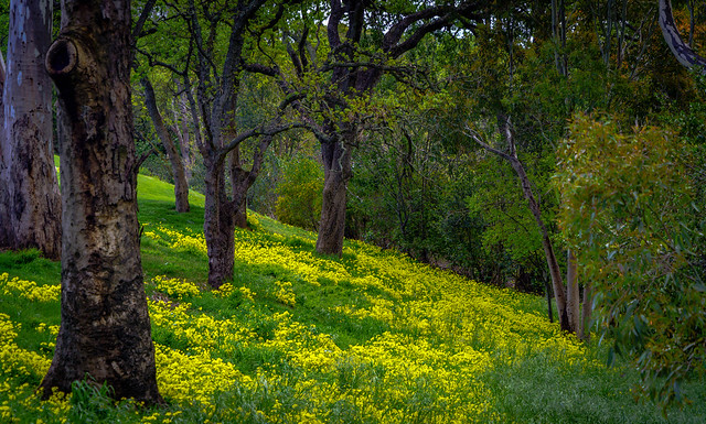 Wild Flowers in the woods-31262
