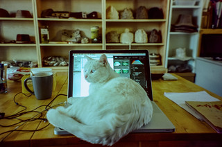 Laptop Cat | by hiphopmilk