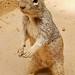 C'mon, I'm Cute - Feed Me! by MonShari™