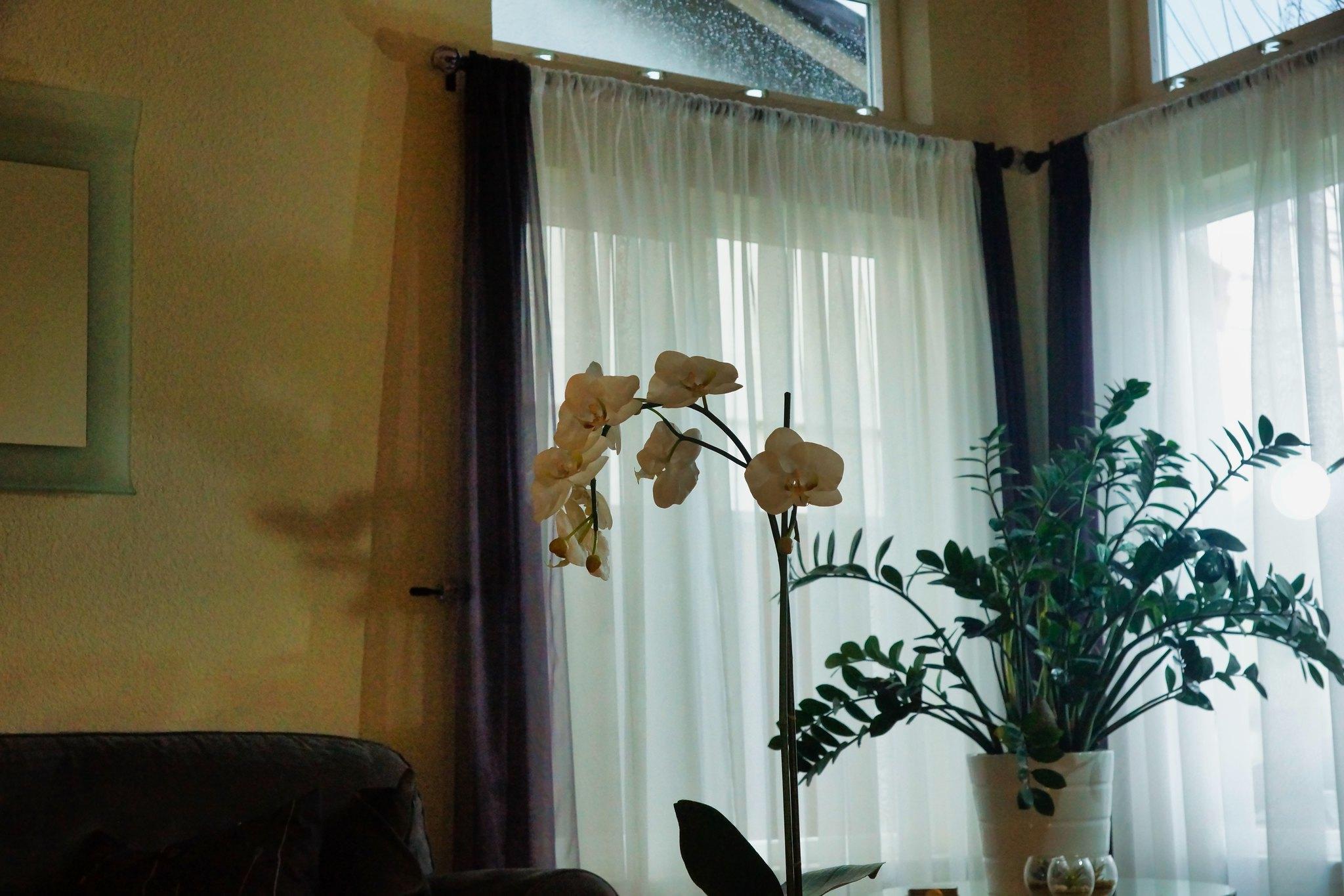 2019-02-14 - Indoor Photography - Indoor Decorations, Set 2