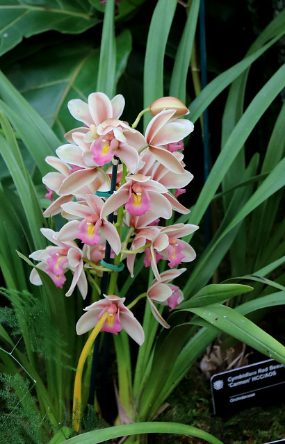 Orchid 28 02-02-19