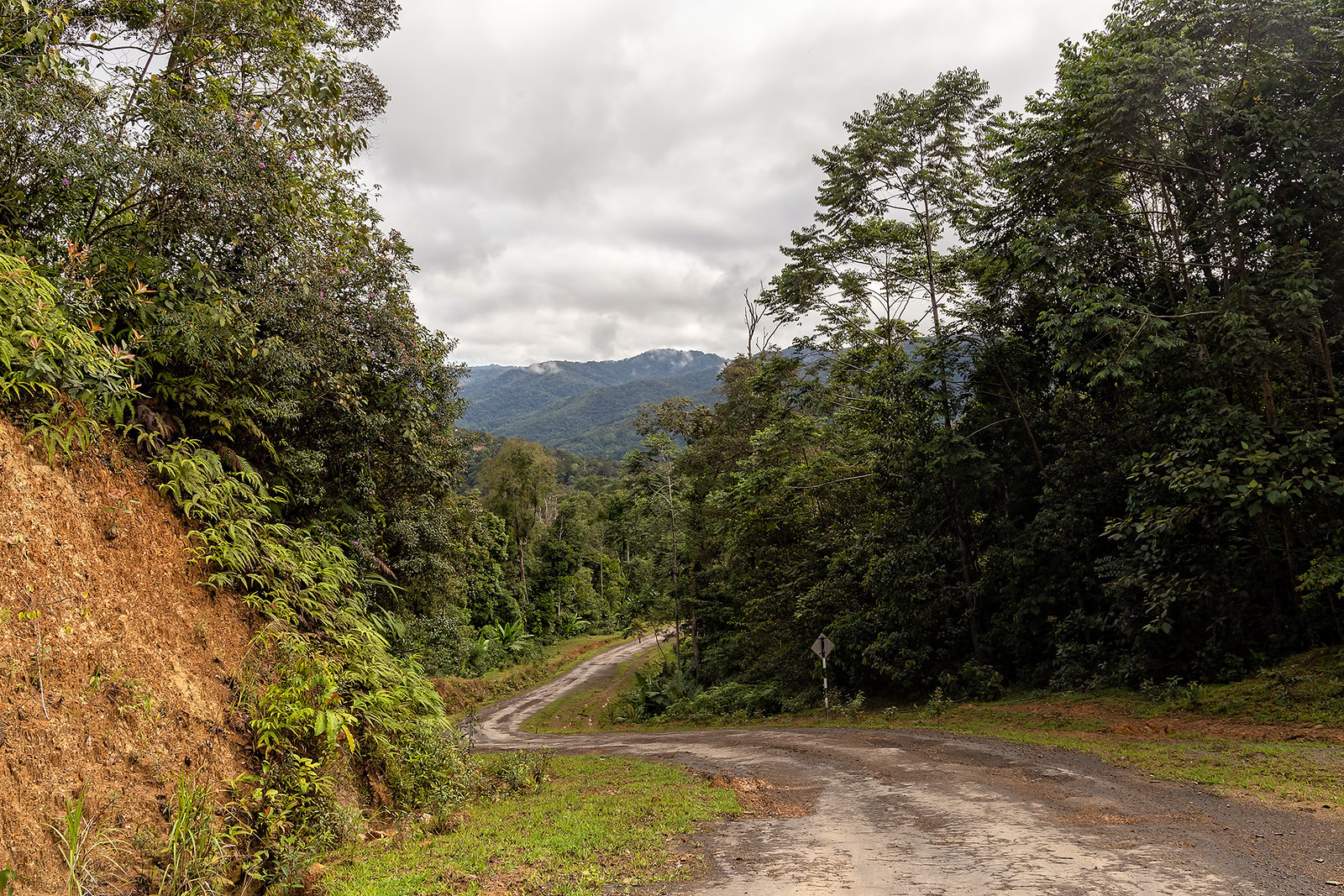 photo of borneo forest and road