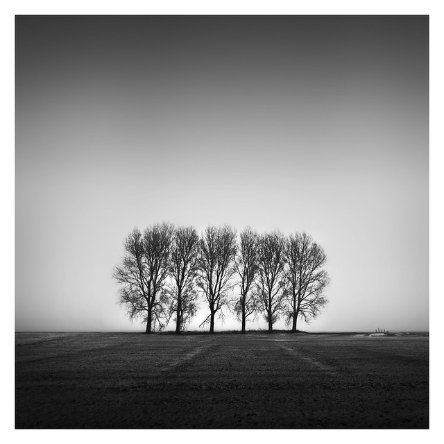 Dutch Polder - The Six Trees