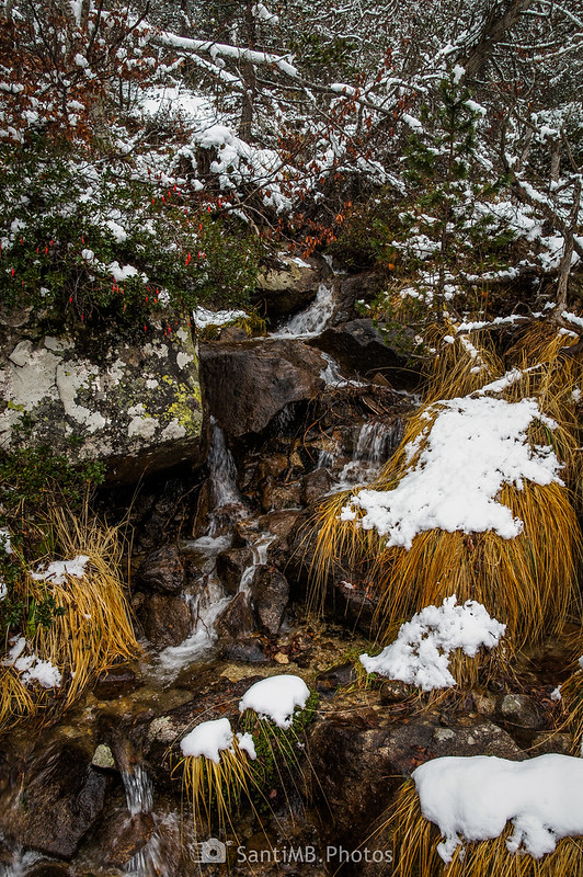 Torrente en el bosque cerca del Saut de Molières