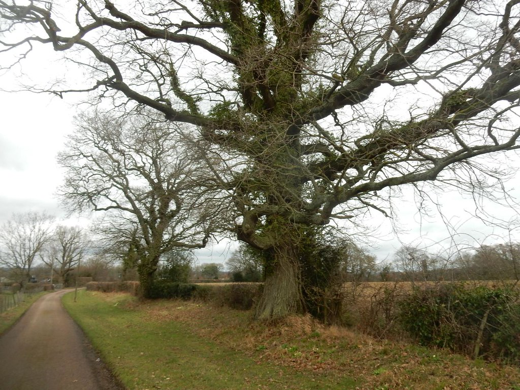 Big trees Robertsbridge circular