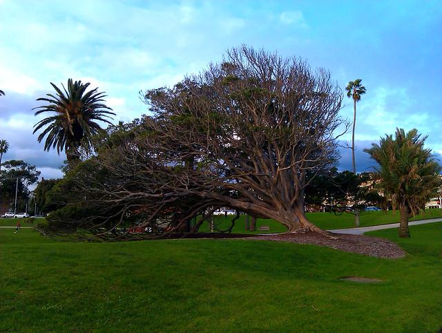 Nature in St.Kilda