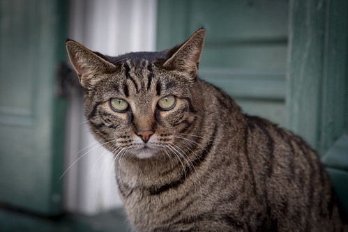 New Orleans - Street Cat | by Richard Ricciardi