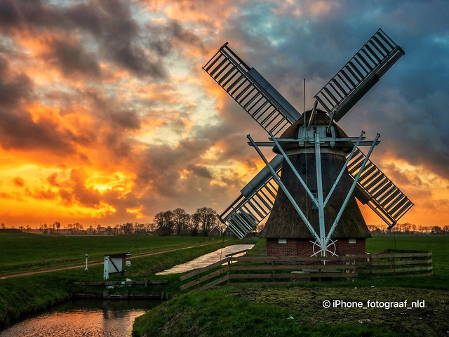 Mill Witte Lam