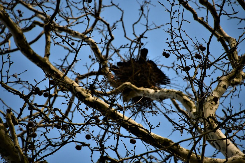 Crows Nesting 19.03 (6)