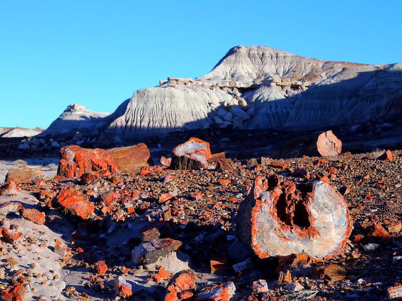 IMG_4694 Jasper Forest, Petrified Forest National Park