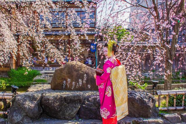 Sakura (桜) 2013 in Kyoto City!