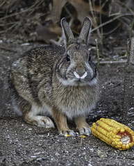 Da easter bunny