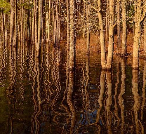 fallslake trees reflection lake sunrise ledgerockboatramp
