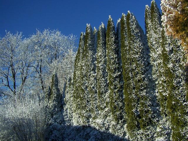 Winter Übertrag 004