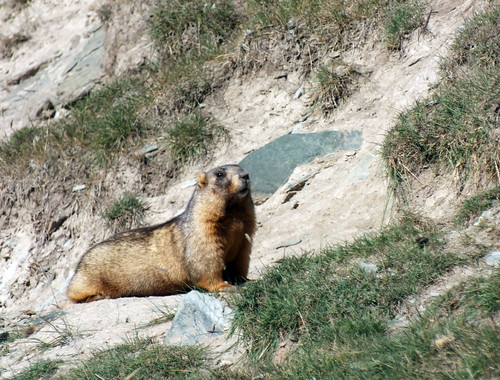 asia kyrgyzstan tash rabat mountains tian shan landscape dana iwachow dragoman overland silk road trip august 2018 marmot