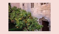 ein maurischer Garten