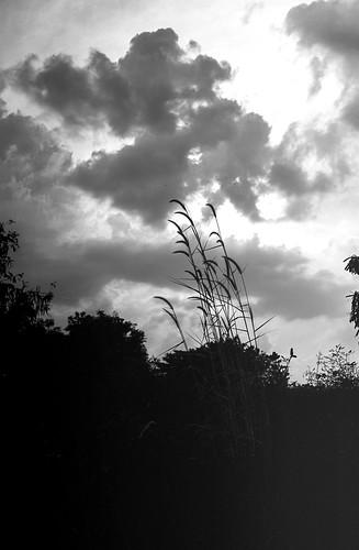 canon7 voigtlandercolorskopar3525 voigtländer agfasoundst8dei12 agfa soundfilm st8d analog film filmisnotdead ishootfilm blackwhite blackandwhite bw monochrome sunset