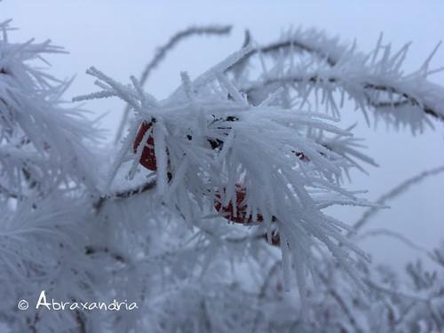 frost3 | by abraxandria