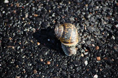 Snail crossing a road