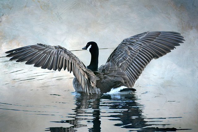 If you were born without wings . . . do nothing to prevent them from growing . . .