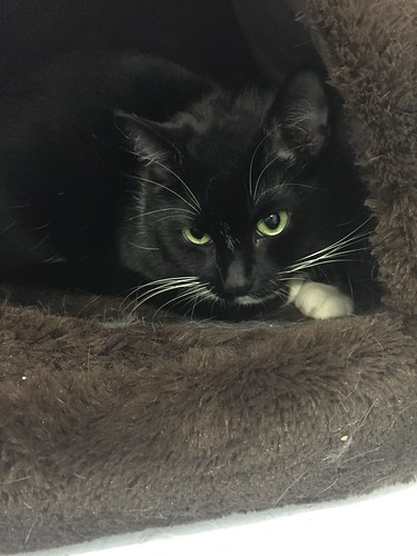 Chilli - 4 year old neutered male | by carescatshelter