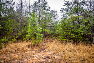 Tall Pines Preserve and South Saluda Church Cemetery-24 | by RandomConnections