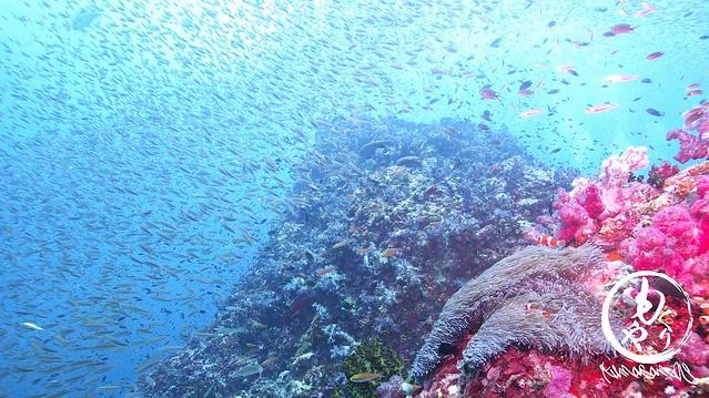 ニモがいる場所も実は小魚の群れがすごい