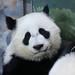 Xi Lun by smileybears