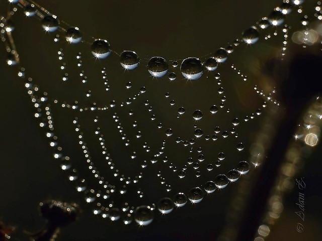 Spiderweb and dew
