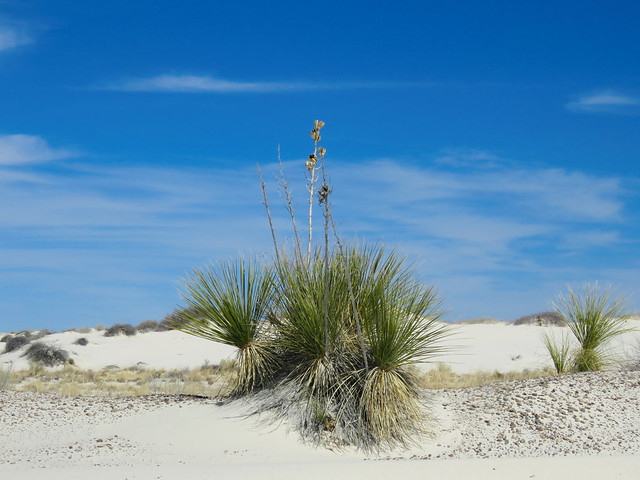 White Sands National Monument #18