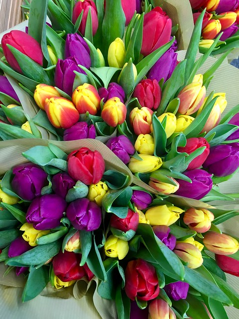 Tulips Multi Colour