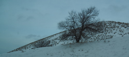 LONELY TREE ON A HILL IN MID-WINTER,  HOPE-PRINCETON,  BC.